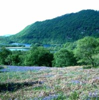 oak_wood_and_bluebells